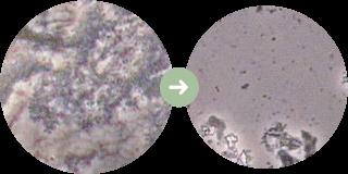 バイ菌の変化イメージ